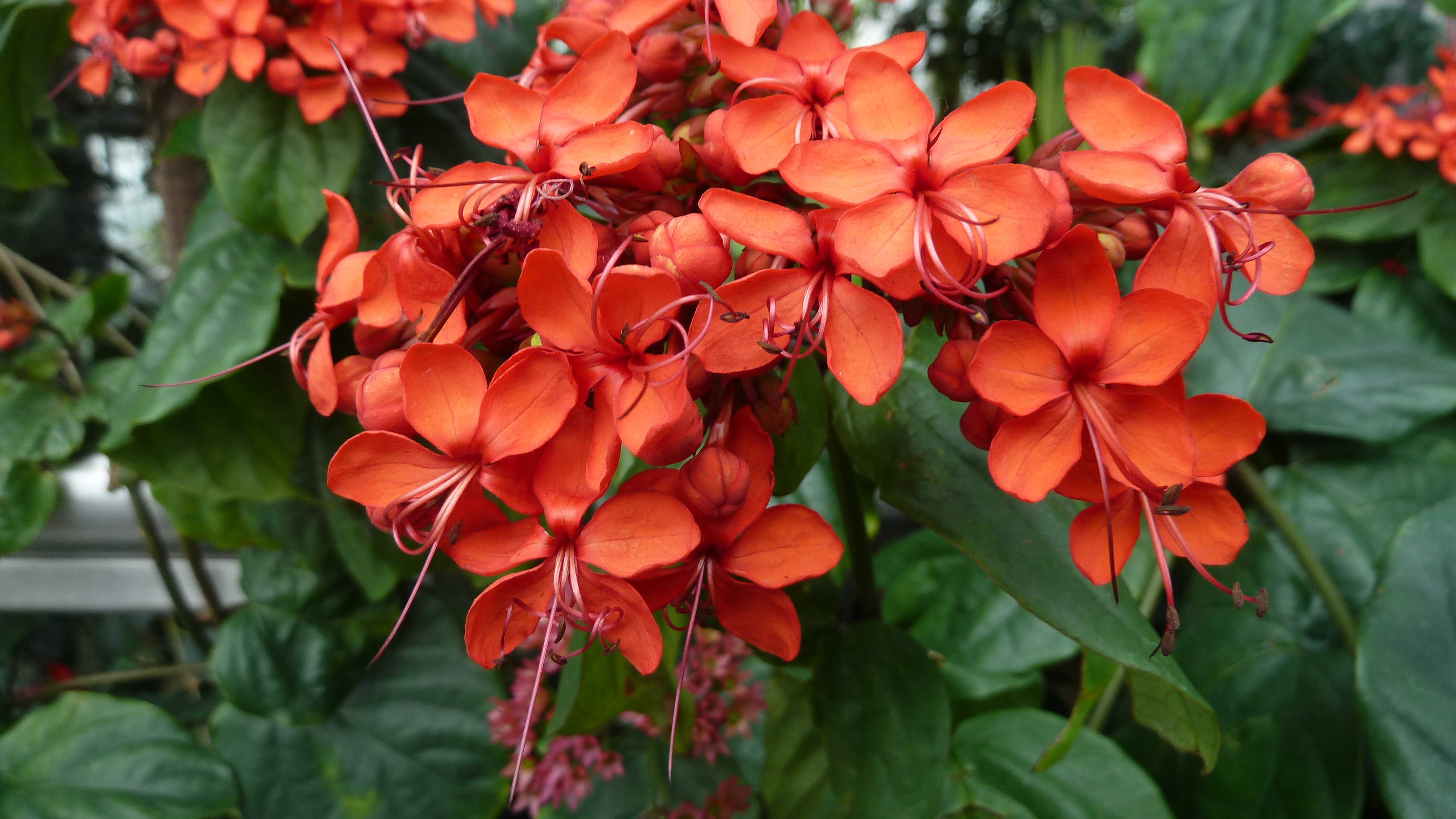 Endangered plants pictures and names Top 15 Endangered Plant Species - Conserve Energy Future